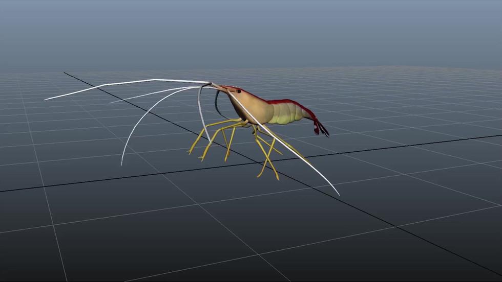 Shrimp rig