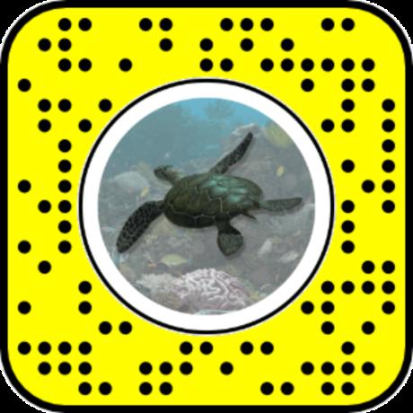 Sea Turtle Lens QR Code