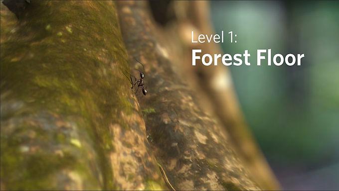 Rainforests 3D