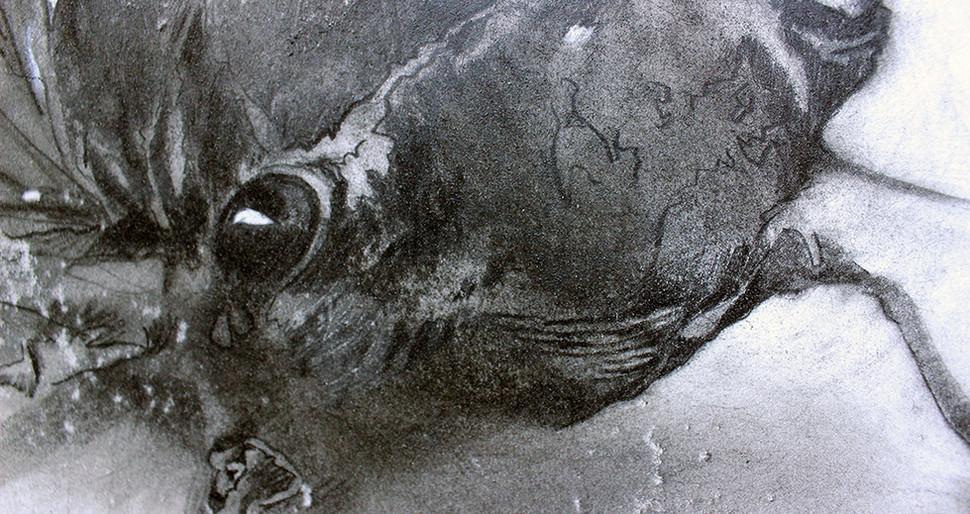 August Humming Cicada detail