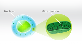 photons-asorbed mito.png