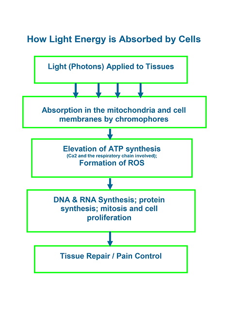 How Light Energy is Absorbed by Cells.pn