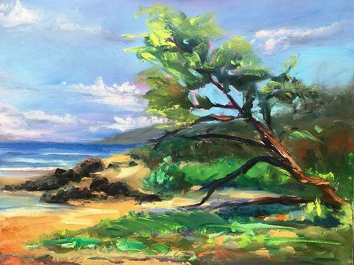 Kiawe Tree on Po'olenalena Beach