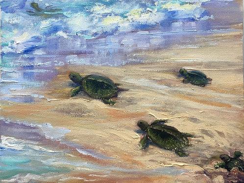 Honu Hatchlings
