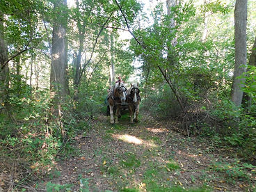 Horse rides through the woods at Pleasant Paradise Farm