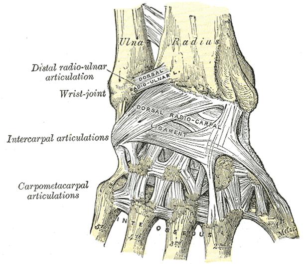 OA MC Joint Image 1 (Gray).png