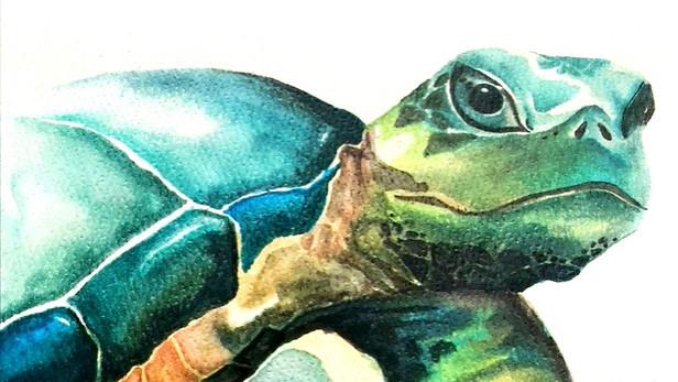 Sea Turtle Stare