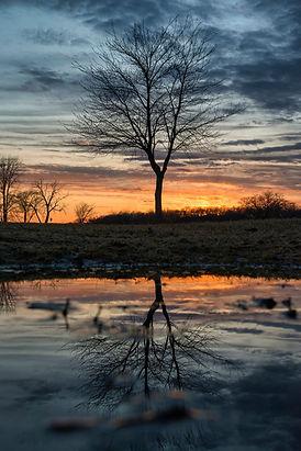 Madison Wisconsin Landscape