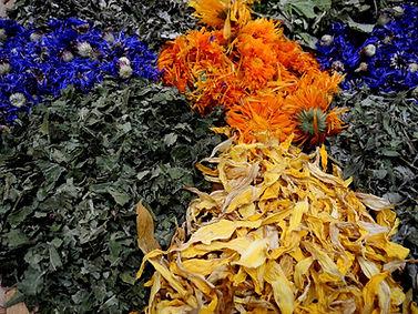 herbs-1644708_1920.jpg