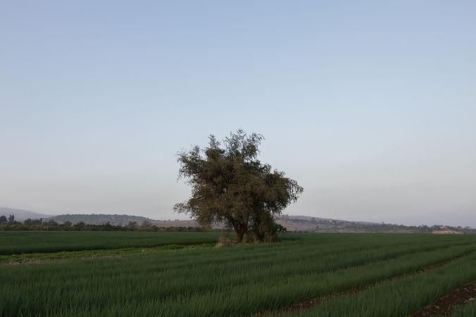 Israel, Hukok, sea of Galilee
