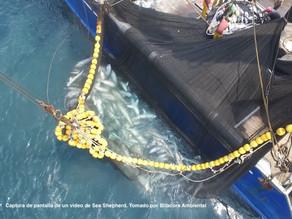 La masacre de tiburones  puede tener un freno; la Asamblea tiene la palabra