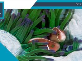 El futuro de los océanos depende del bienestar de los animales acuáticos, ellos sí sienten