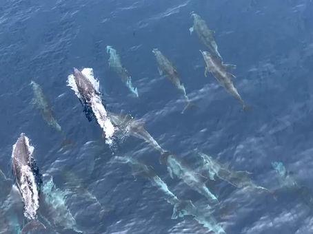 Los delfines festejan la vida    en las islas Galápagos