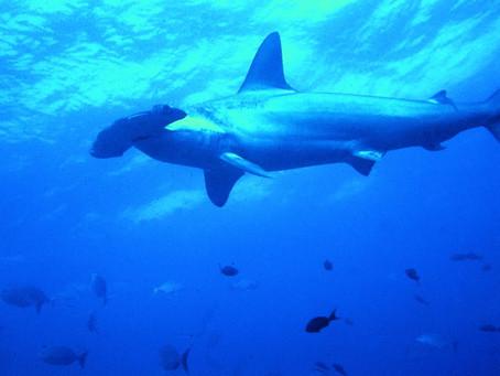 ¡La Nueva Reserva Marina de Galápagos va por que va!