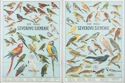 45. Sever & Ko. Ljubljana: Reklamna plakata z motivi ptic