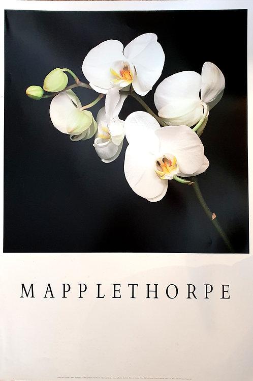 121. Mapplethorpe: Orhideje