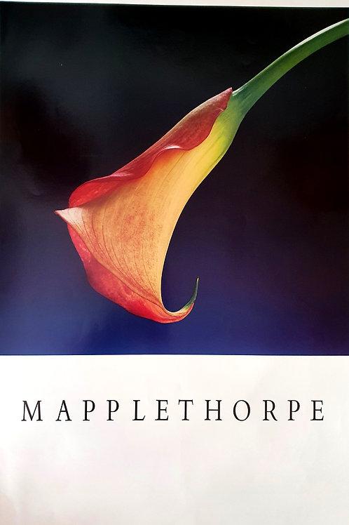 122. Mapplethorpe: Kala (oranžna)