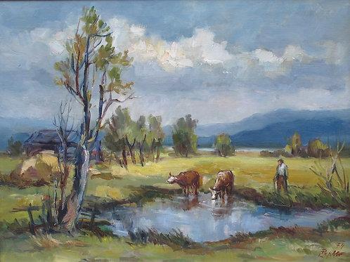 127// Lojze Perko:  Krave ob Cerkniškem jezeru