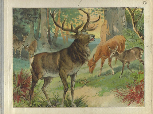 115. Ilustrirana knjiga o živalih