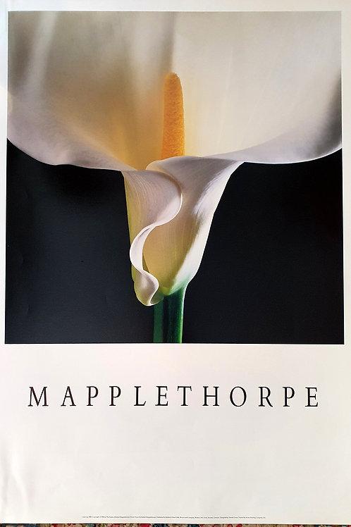 120. Mapplethorpe: Kala (bela)