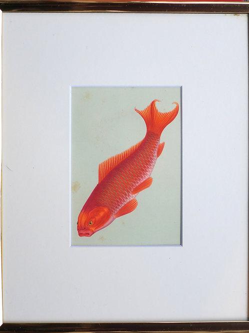 88. Rdeča ribica