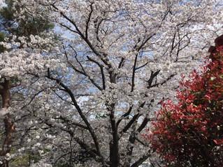 『春の訪れ』