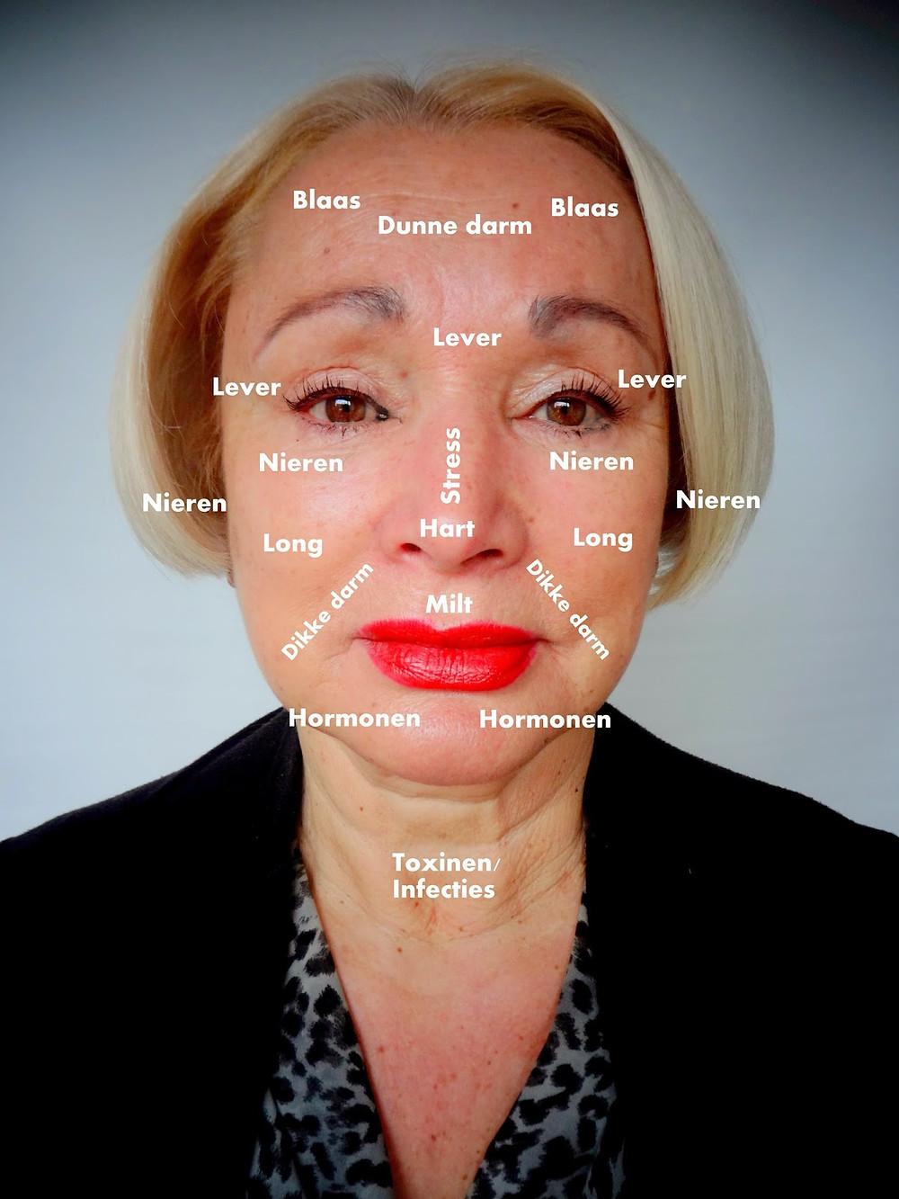 De zones die men gebruikt bij het face mapping.