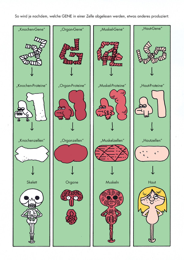 Biologie Comic_Lukas Kummer_6.jpg