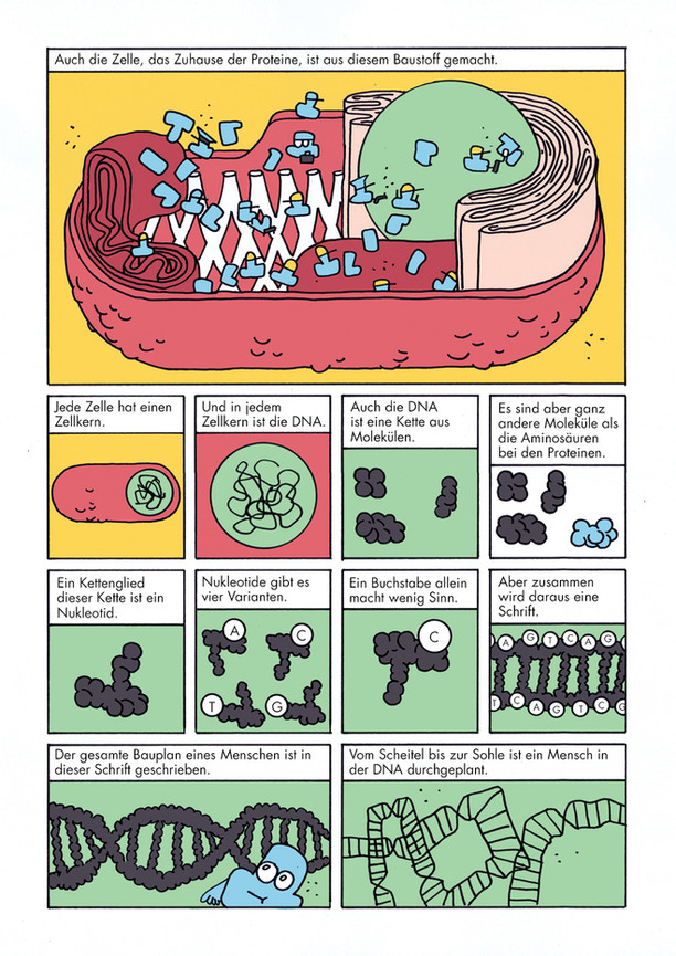 Biologie Comic_Lukas Kummer_3.jpg