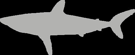 Lamnidae.grey.png