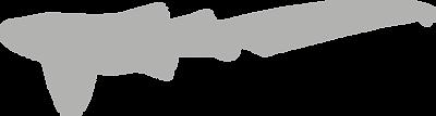 Stegostomatidae.grey.png