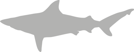 Carcharhindidae.grey.png