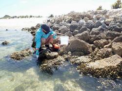 Tampa Bay, Florida, USA with Havenworth Coastal Conservation. Photo credit Tonya Wiley