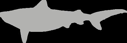 glaeocerdidae.grey.png