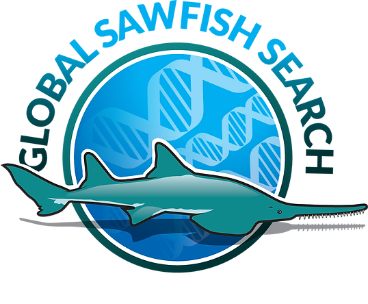 Global Sawfish Search Logo