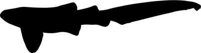 Stegostomatidae.png