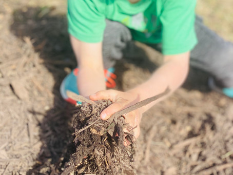 Nutrient rich berries start with the soil