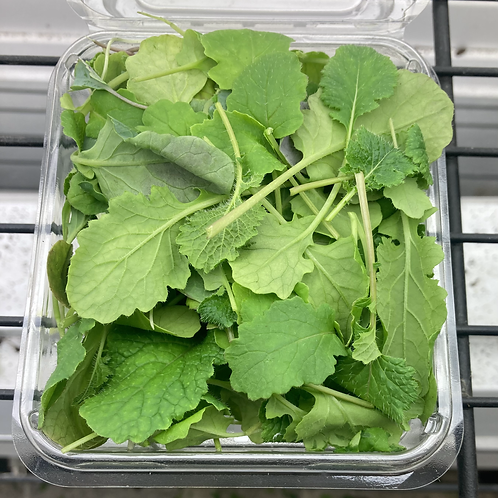 Micro-greens, mild mustard mix, 0.75 oz.