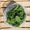 Bag o Spinach.JPG