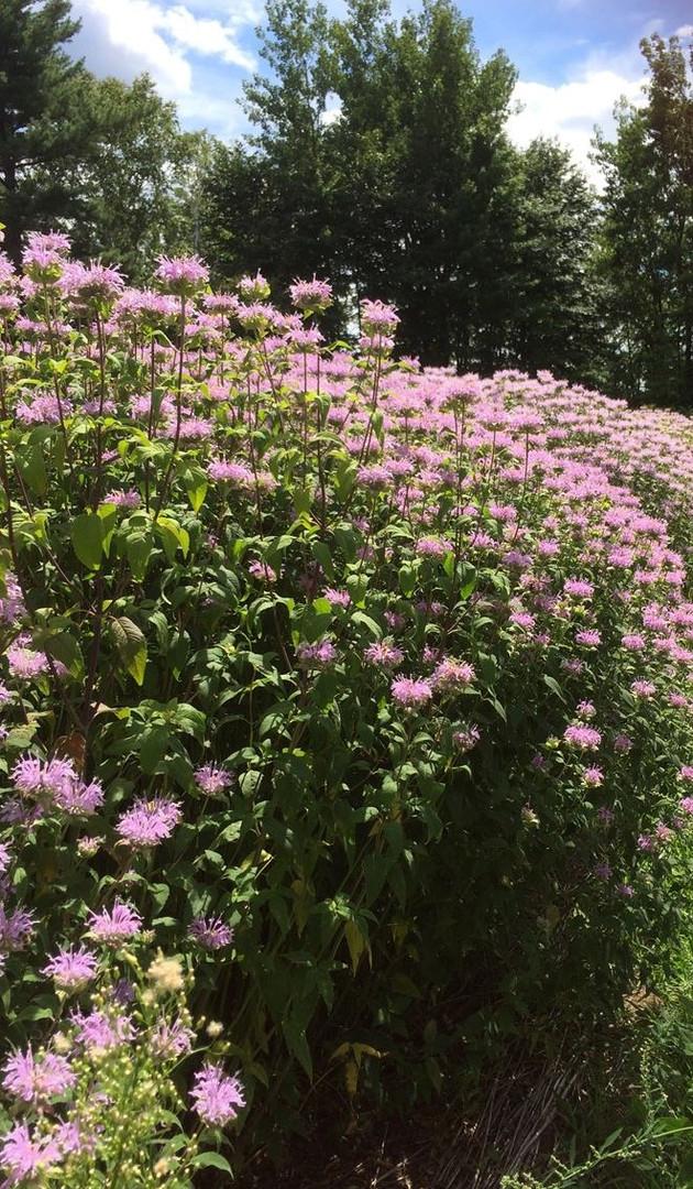 Fleurs du jardin De Fleur à sens