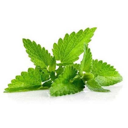 Menthe verte (huile essentielle)