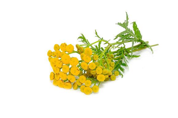 Tanaisie vulgaire (huile essentielle)