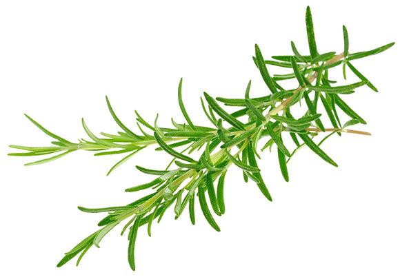 Romain à cinéole (huile essentielle)