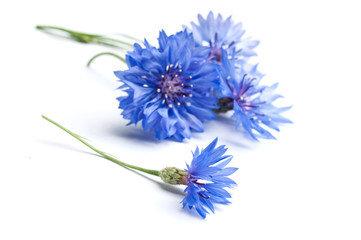 Centaurée bleuet (plante séchée)