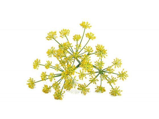 Fenouil doux (huile essentielle)