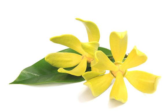 Ylang ylang (huile essentielle)