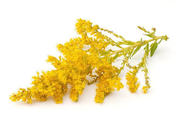 Verge d'or (huile essentielle)