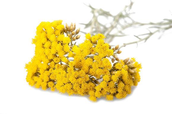 Hélichryse italienne (huile essentielle)