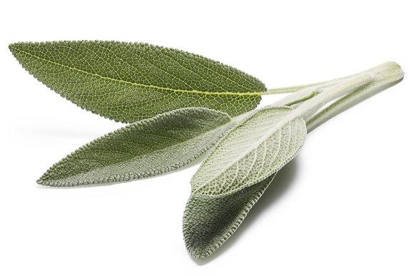 Sauge officinale (plante séchée)