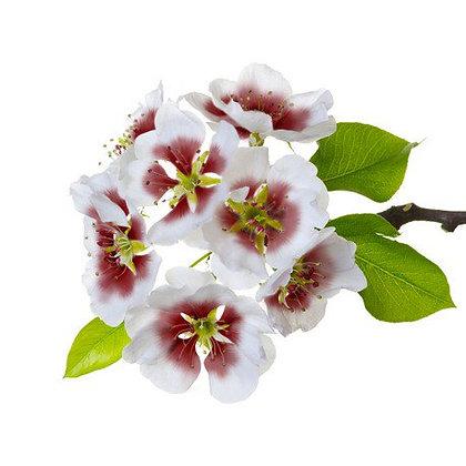 Fragonia (huile essentielle)